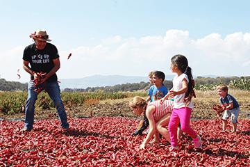 Agricultural festivals