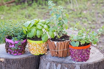 Plants that will prepare the digestive system for Passover 63