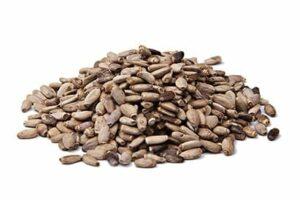 זרעי גדילן