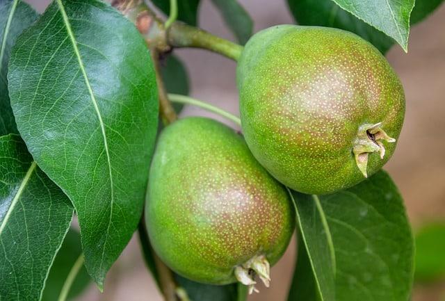 צמחי מרפא ותבלינים להאטת ההזדקנות