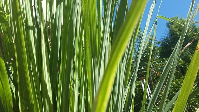 צמחי מרפא – צמחים לצד רופא? אבי ציטרשפילר מחוות דרך התבלינים אודות צמחי מרפא